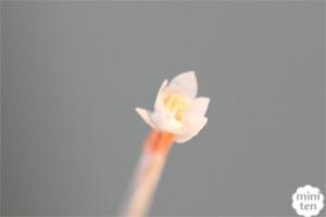 20090310_4